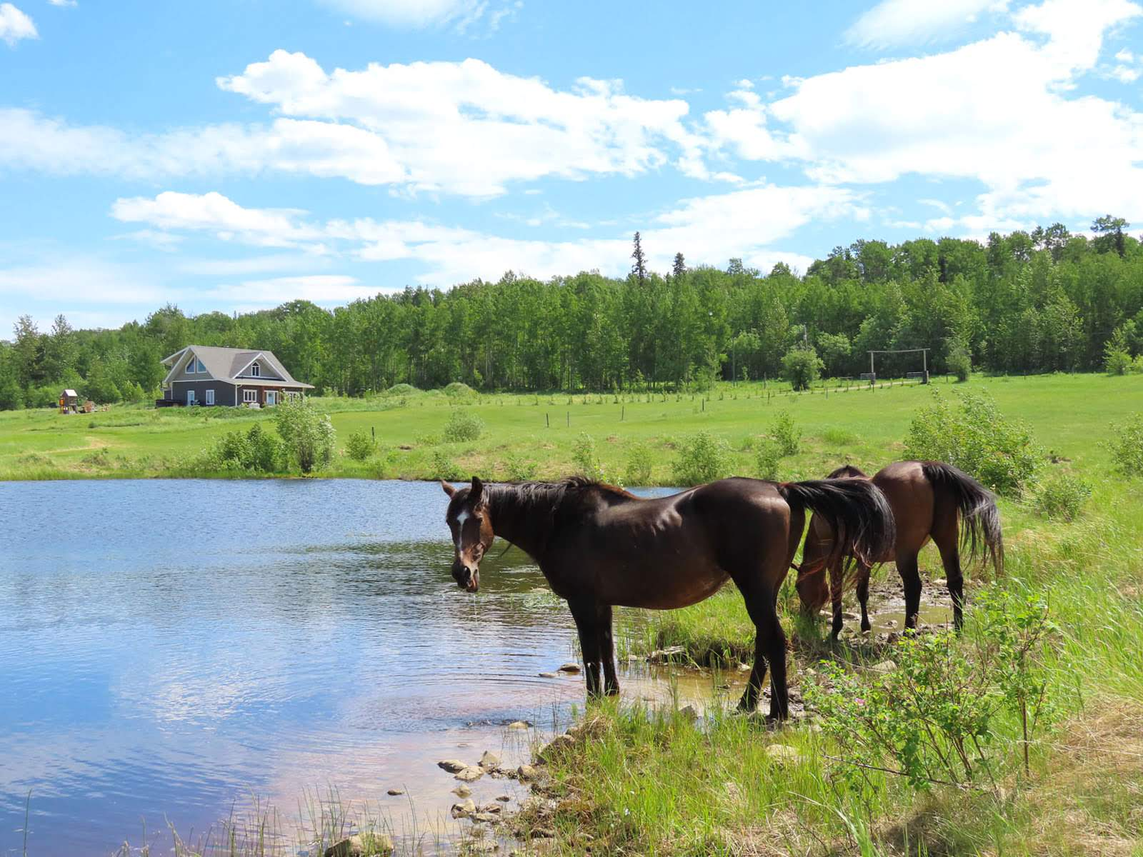 610 Cowie Creek Road, Lone Prairie, British Columbia    - Photo 9 - RP1124718028
